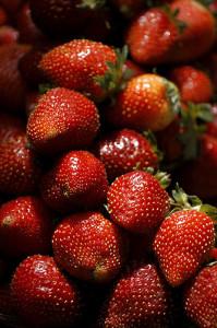 Jak sázet jahody